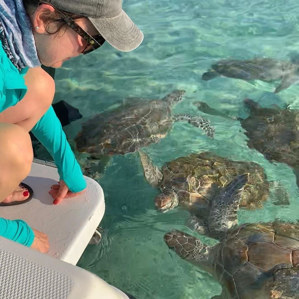 Feeding Green Sea Turtles