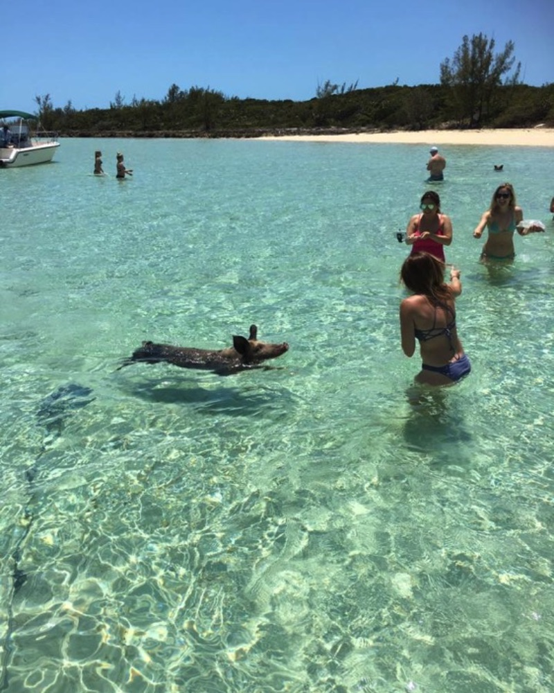 We will boat to a picture perfect beautiful island beach, where you can feed, swim, and interact with these extraordinary pigs.